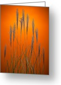 Prairie Greeting Cards - Fountain Grass In Orange Greeting Card by Steve Gadomski