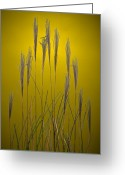 Prairie Greeting Cards - Fountain Grass In Yellow Greeting Card by Steve Gadomski