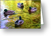 Mallards Greeting Cards - Four Ducks on Pond Greeting Card by Amy Vangsgard