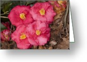 Fine Home Art And Theater Greeting Cards - Four Flowers Greeting Card by Don  Wright
