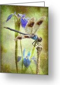 Mosquito Greeting Cards - Four Spotted Pennant and Louisiana Irises Greeting Card by Bonnie Barry
