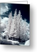 Pine Tree Greeting Cards - Four Tropical Pines Infrared Greeting Card by Adam Romanowicz