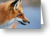 Sly Greeting Cards - Fox profile Greeting Card by Mircea Costina Photography