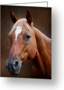 Quarter Horses Greeting Cards - Fox - Quarter Horse Greeting Card by Sandy Keeton