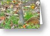Squirrel Photographs Greeting Cards - Fox Squirrel Eating Nut Greeting Card by Ester  Rogers