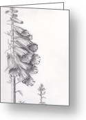 Botanical Drawings Greeting Cards - Foxglove Greeting Card by Janel Bragg