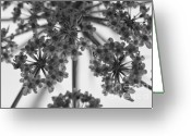 Slr Greeting Cards - Fractal Flower Photoset 02 Greeting Card by Ryan Kelly