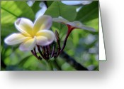 Kevin W .smith Greeting Cards - Fragile Frangipani Greeting Card by Kevin Smith