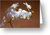 Exotic Flora Greeting Cards - Fragile Orchid  Greeting Card by Svetlana Sewell