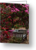 Gardens Greeting Cards - Fragrant Throne Greeting Card by JoAnn SkyWatcher