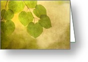 Leaves Photo Greeting Cards - Framed in Light Greeting Card by Rebecca Cozart