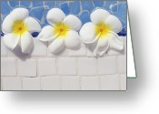 Tile Greeting Cards - Frangipani Flowers Greeting Card by Laura Leyshon