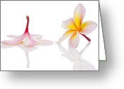 Mo Greeting Cards - Frangipani or Leelawadee Greeting Card by Atiketta Sangasaeng