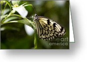 Beauty Mark Greeting Cards - Fred Greeting Card by Leslie Leda