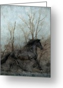 Stallion Greeting Cards - Free Greeting Card by Jean Hildebrant