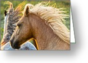 Wild Horses Greeting Cards - Free Spirits Greeting Card by Ron  McGinnis