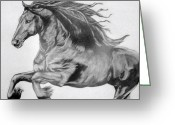 Wild Horse Drawings Greeting Cards - Freedom Greeting Card by Sandi Dawn McWilliams
