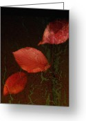 Red Leaves Greeting Cards - Freefall Greeting Card by Bonnie Bruno