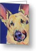 Working Dogs Greeting Cards - Freida Greeting Card by Pat Saunders-White