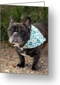 French Bulldog Prints Greeting Cards - French Bulldog 96 Greeting Card by Joyce StJames