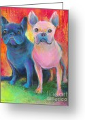 Custom Pet Portrait Greeting Cards - French Bulldog dogs white and black painting Greeting Card by Svetlana Novikova