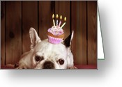 Animal Head Greeting Cards - French Bulldog With Birthday Cupcake Greeting Card by Retales Botijero