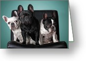 Three Animals Greeting Cards - French Bulldogs Greeting Card by Retales Botijero