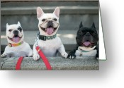 Three Animals Greeting Cards - French Bulldogs Greeting Card by Tokoro
