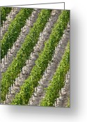 Vinifera Greeting Cards - French Vineyard Greeting Card by Martyn F. Chillmaid
