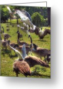 Feeding Greeting Cards - Frenzy Greeting Card by Joann Vitali