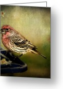 Kathy Jennings Greeting Cards - Frequent Visitor Greeting Card by Kathy Jennings
