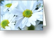 Featured Artwork Prints Greeting Cards - Fresh Daisies Greeting Card by Kathy Yates