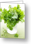 Herb Greeting Cards - Fresh herbs in a glass Greeting Card by Elena Elisseeva