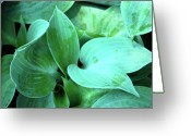 Macro Greeting Cards - Fresh Hostas Greeting Card by Kimberly Gonzales