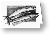 Feed Greeting Cards - Fresh mackerels Greeting Card by Michal Boubin
