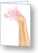 Manicure Treatment Greeting Cards - Fresh pink lily  in female hands Greeting Card by Anna Omelchenko