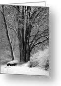Winter Trees Greeting Cards - Fresh Snow  Greeting Card by Carol Groenen