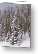 Santa Fe National Forest Greeting Cards - Fresh Snow Tops The Trees In Santa Fe Greeting Card by Ralph Lee Hopkins