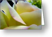 Dew Drops Greeting Cards - Fresh Summer Sheets Greeting Card by Louie Rochon