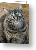 Whiskers Greeting Cards - Frieda Up Close Greeting Card by Suzanne Gaff