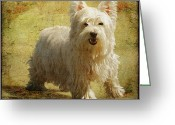 West Highland White Terrier Greeting Cards - Friendly Smile Greeting Card by Lois Bryan