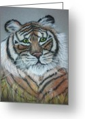 Friendly Pastels Greeting Cards - Friendly Tiger Pastel Portrait Greeting Card by Hillary Rose