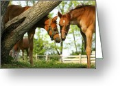 Quarter Horses Greeting Cards - Friends Greeting Card by Angela Rath