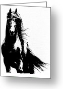Wild Horse Drawings Greeting Cards - Friesian Horse Greeting Card by Kate Black