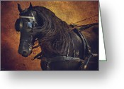 Pony Greeting Cards - Friesian Under Harness Greeting Card by Lyndsey Warren