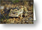 Spotted Greeting Cards - Frog Greeting Card by Elena Elisseeva