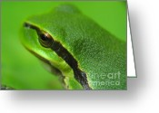 Screen Doors Greeting Cards - Frog look Greeting Card by Odon Czintos