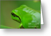 Screen Doors Greeting Cards - Frog Greeting Card by Odon Czintos