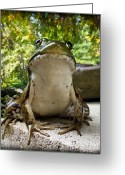 Closeup Greeting Cards - Frog Prince or so he thinks Greeting Card by Bob Orsillo