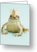 Frog Prince Greeting Cards - Frog Wearing Crown Greeting Card by Walter B. McKenzie